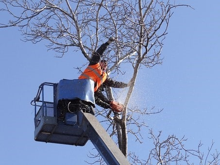 Arborist Checking Tree Health