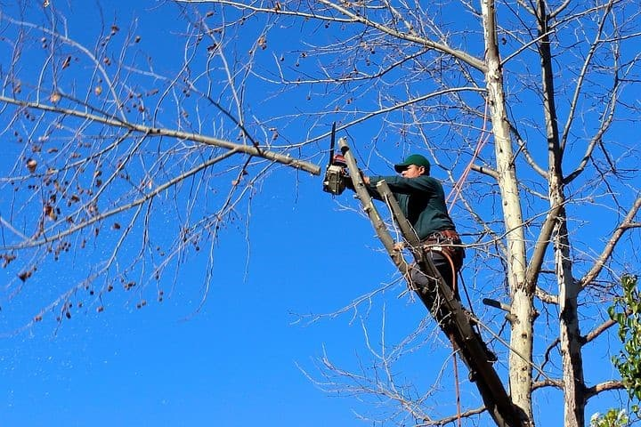 Arborist Cutting Tree Limb