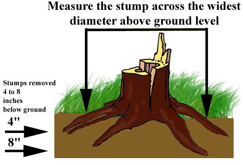 Measuring Stump For Grnding And Removal