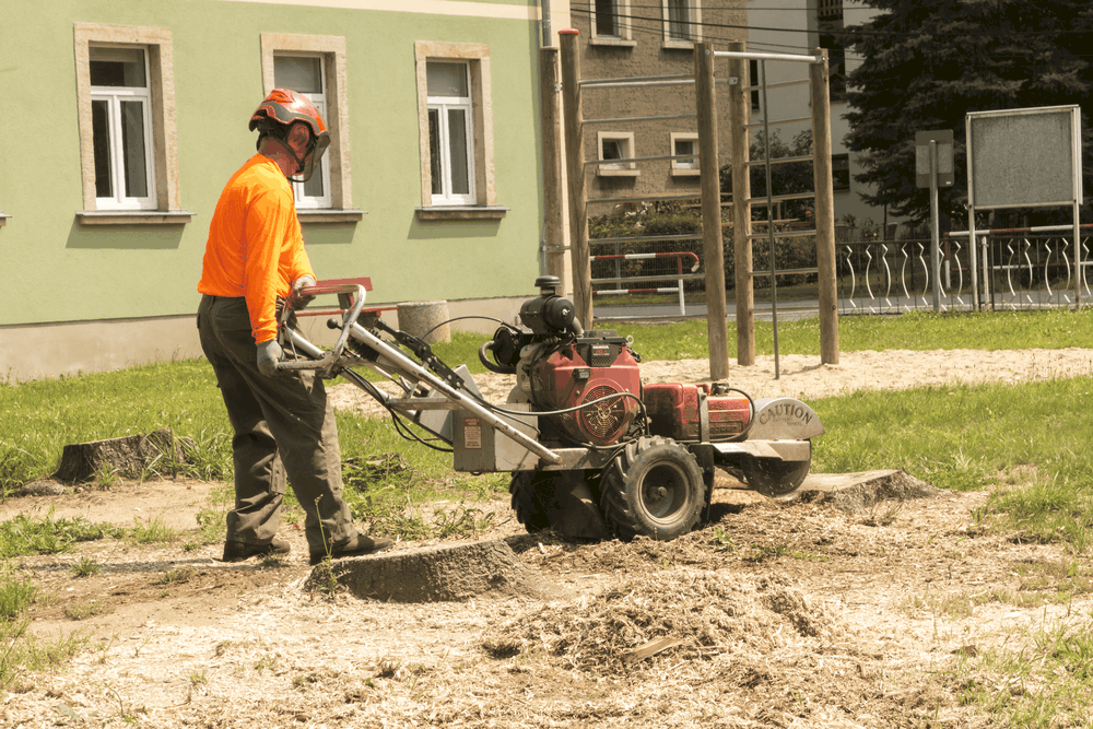 Stump Grinding Diy Rental