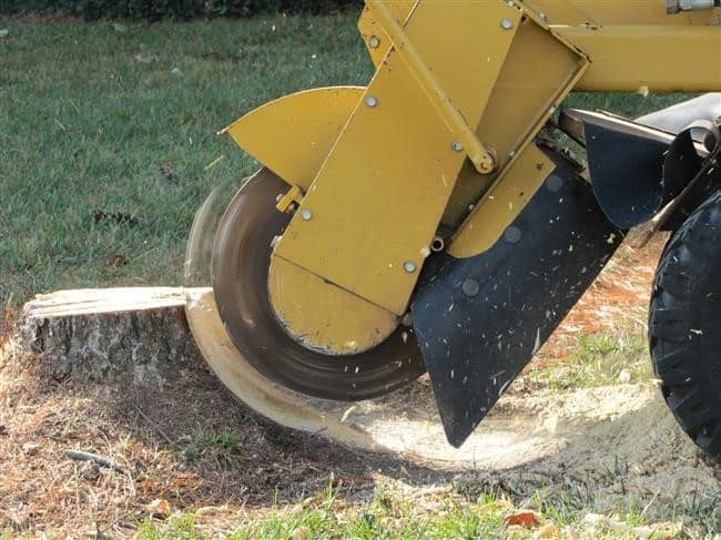 Stump Grinding Trees